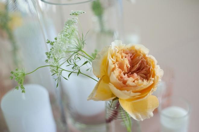 simple cabbage rose