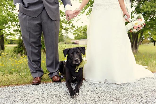 Darling dog in the wedding