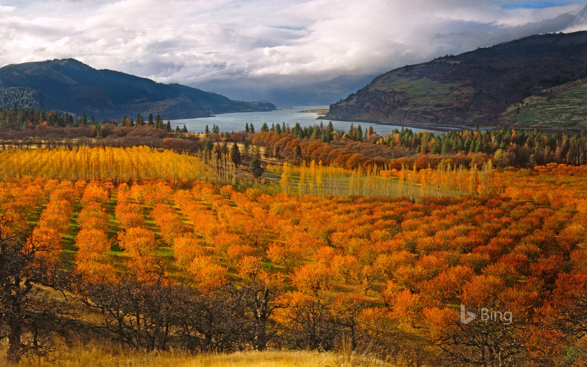 Bing Fall Desktop Wallpaper Cherry Orchards In The Columbia River Gorge National