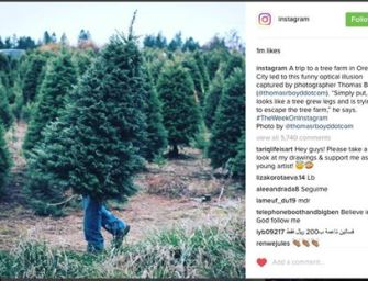 A Trip to a Tree Farm and Insta Fame
