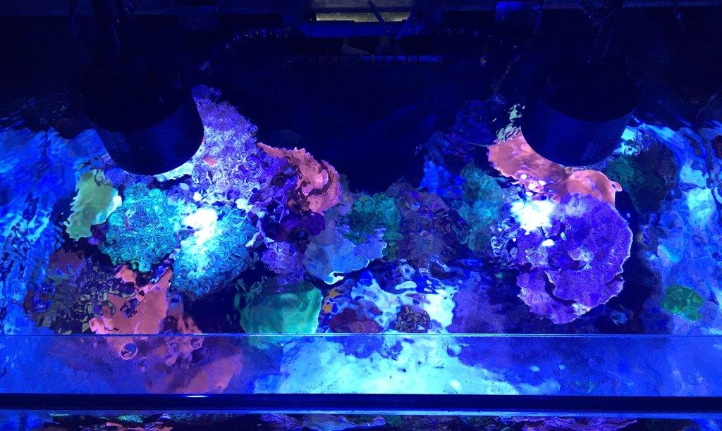 soraci fish tank top view