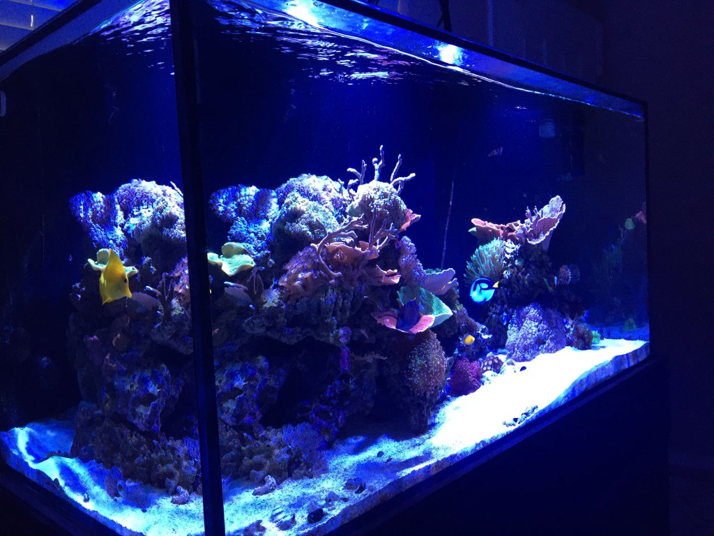 soraci reef tank