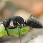 アリと油性ペン