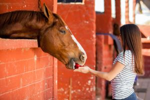 25920462 - beautiful young woman feeding an apple to her horse in the stables