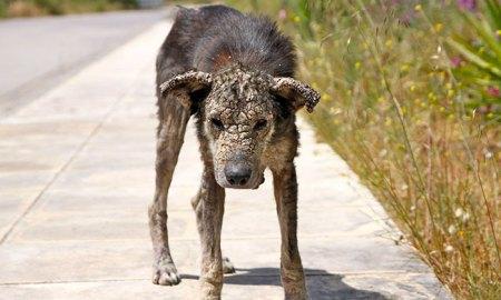 stray-dog-transform-stone-mange-petra-greece-7