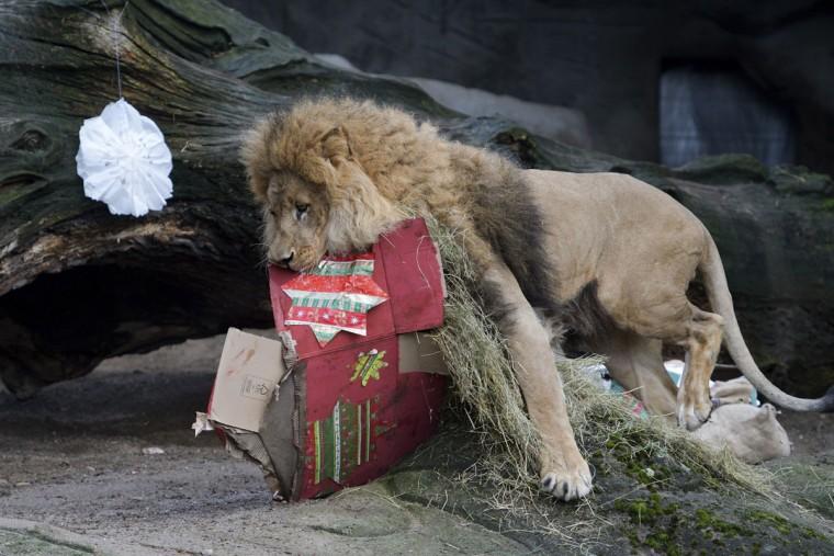 apphoto_germany-christmas-zoo-1-760x507