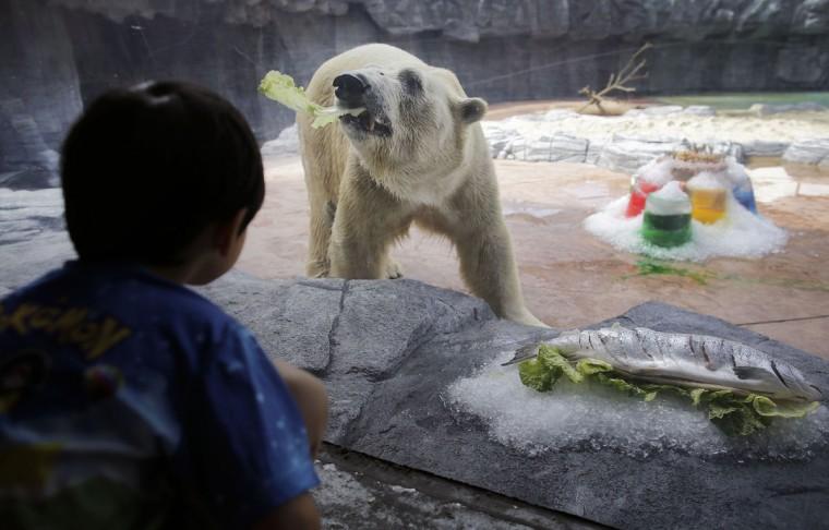 apphoto_singapore-zoo-polar-bear-760x486