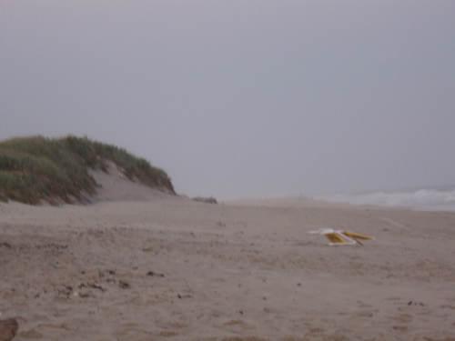 At the Beach in Amagansett