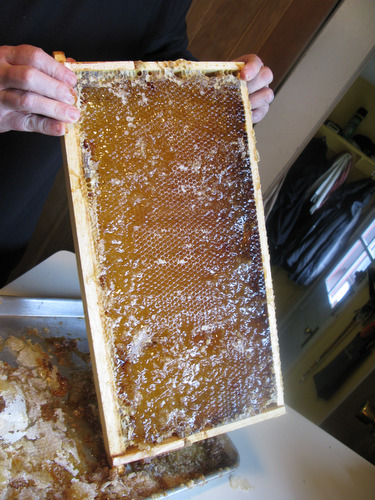 Harvesting Honey at the Farm