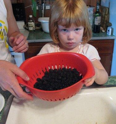 Wild Blackberry Breakfast