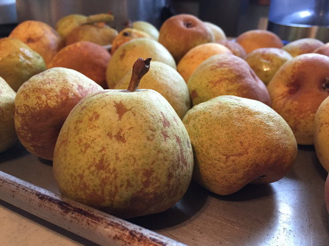 Pear Harvest: It's a Good Year