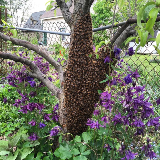 Bees Swarm!