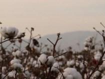 Gap Joins Better Cotton Initiative