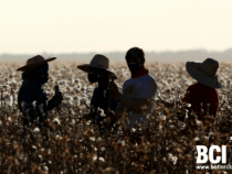 BCI Report Says Brazil Still Largest Source of Better Cotton Globally