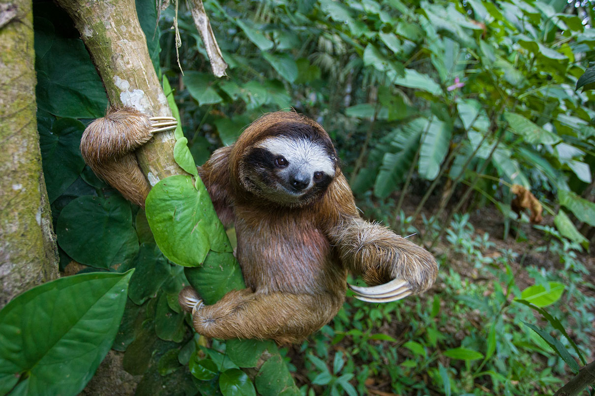 Whatsapp Cute Wallpaper Images New Sloth Book Features Amazing Photographs And Busts