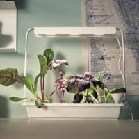 Ikea launches hydroponic indoor gardening kit