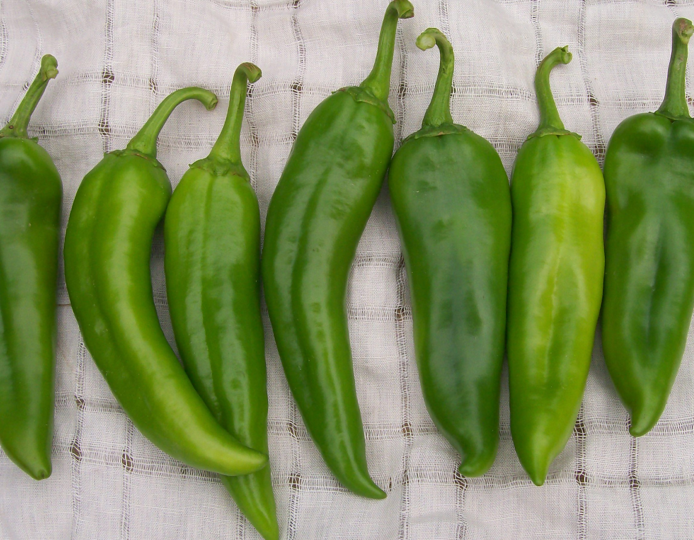 Capsicum Annuum Anaheim Chile Hot Pepper, 0.3 G : Southern Exposure Seed