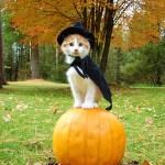 Top 2010 Halloween Costumes: #3-1
