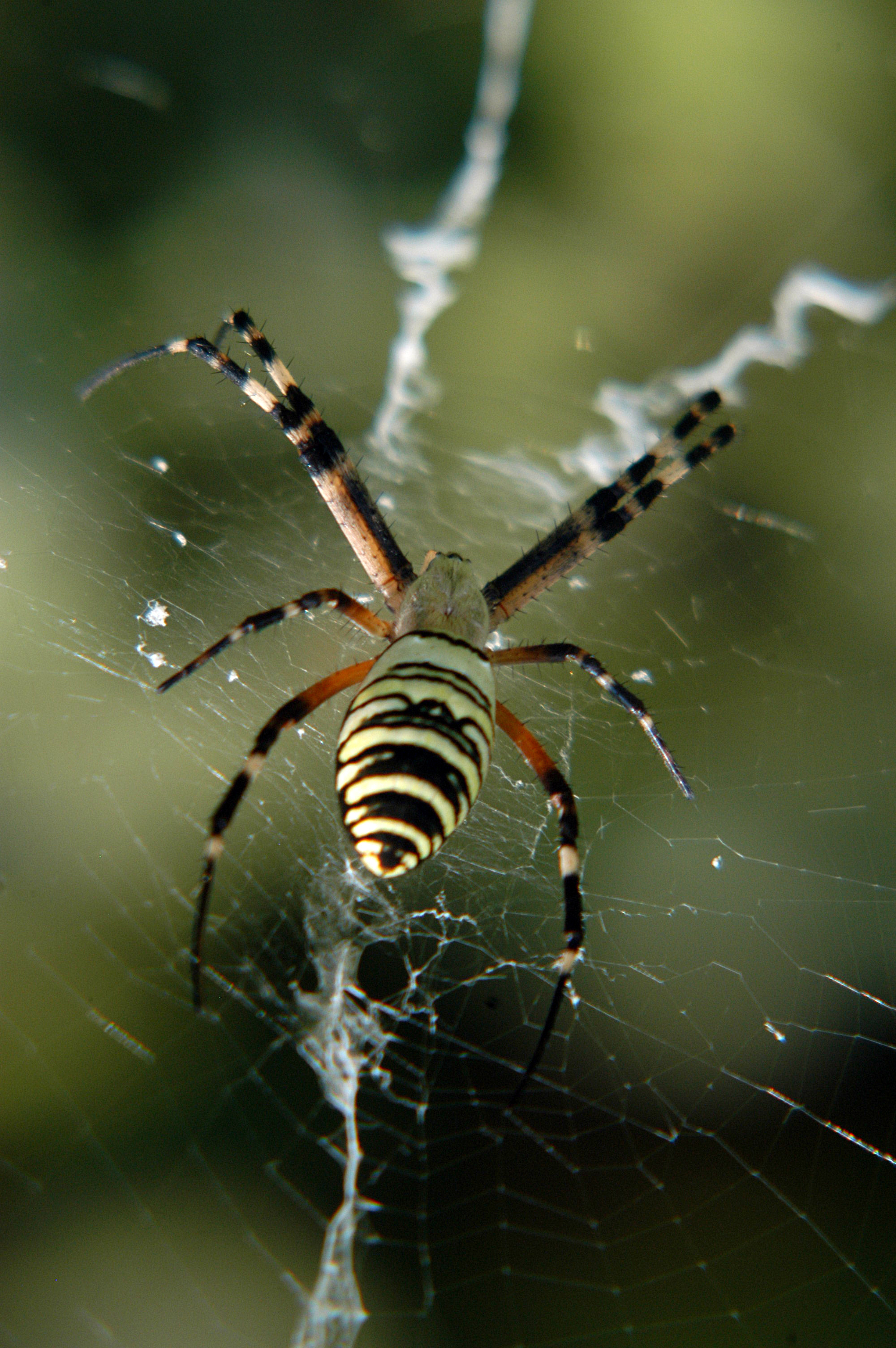 Do It Yourself Pest Control Brandon Dealing With Spiders On Your Property Southern Green