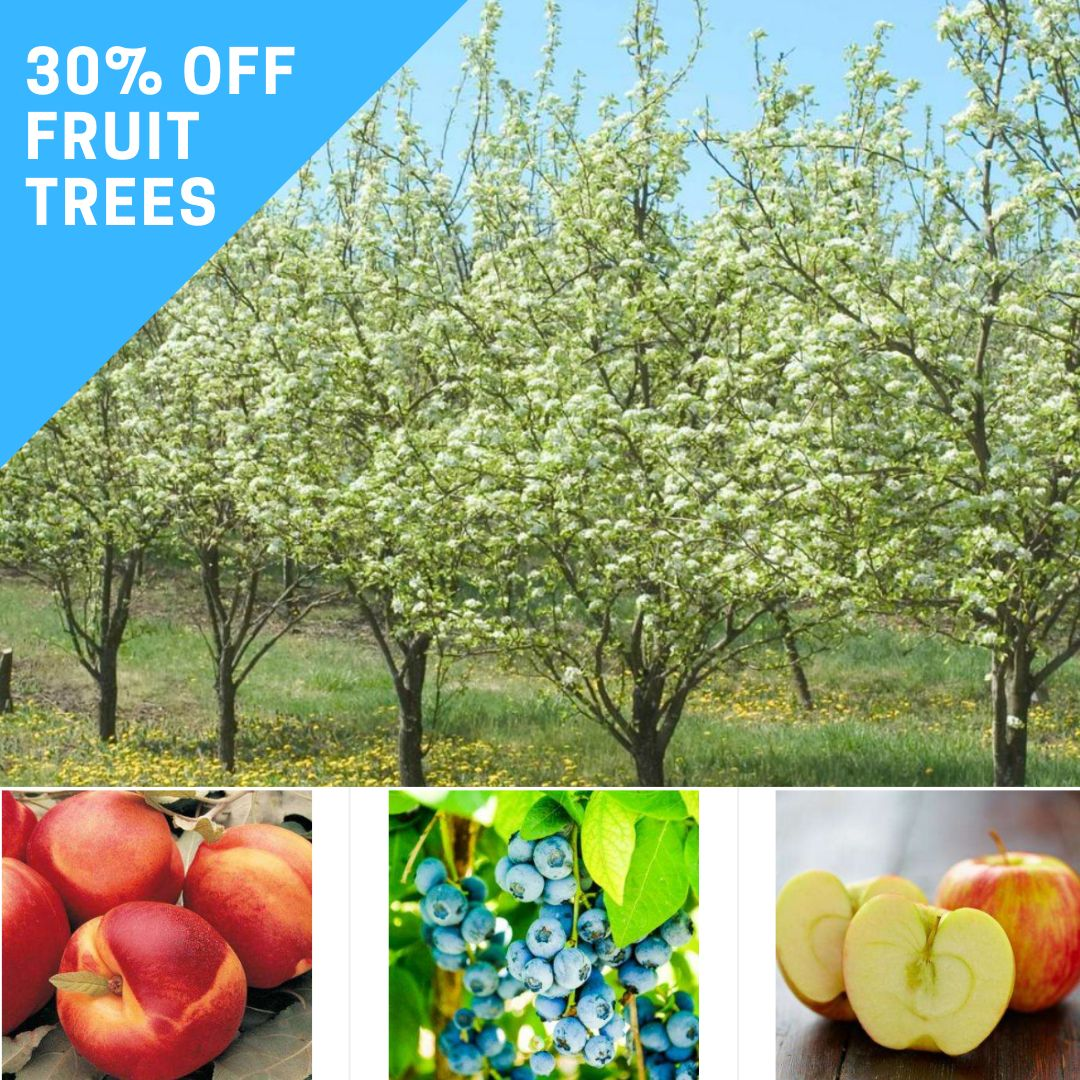 Trees And Shrubs 30 Off Fruit Trees And Shrubs Southern Savers