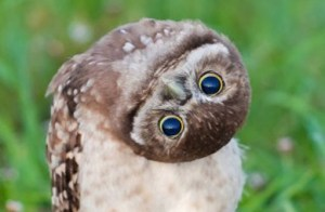 130207.owl