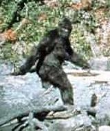 bigfoot01