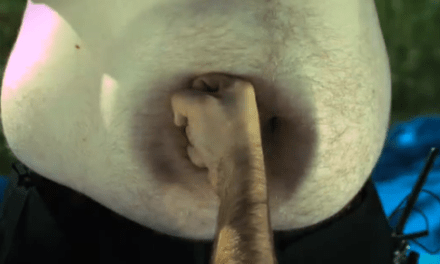Disparando bolas de plástico a una barriga a cámara superlenta