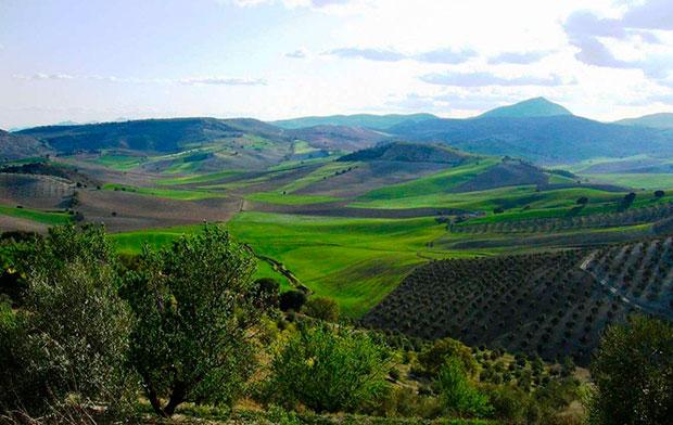 Campos de olivos en Sierra Mágima (Jaén)
