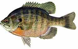 Space Coast Freshwater Fishing 101