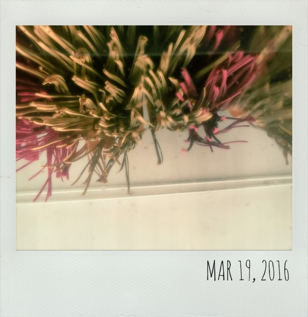 Polaroid March 19