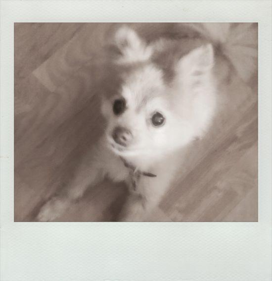 polaroid_04-9