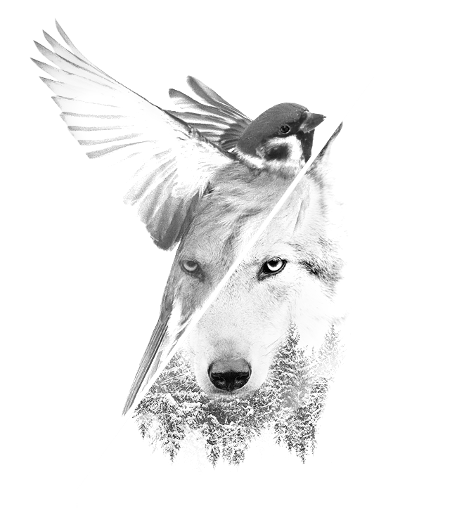 Wallpaper With Quotes Attitude Home Page 2018 Sparrow Wolf