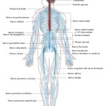 Diventare neurologo - cerca neurologo milano