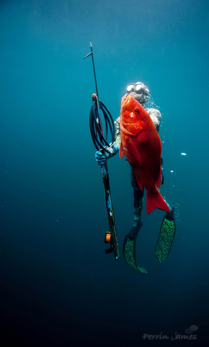 Girl With Spear Wallpaper Red Snapper Spearfishing Spearfishing Panama