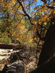 Autumn colors Suicide Rock