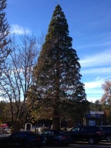 Idyllwild Christmas tree daytime