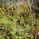 WILD CRANBERRY AND ORANGE SAUCE