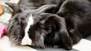 Bunnies (11 of 12)