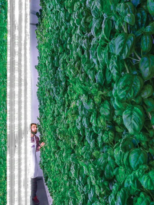 The Green Promise of Vertical Farms - IEEE Spectrum