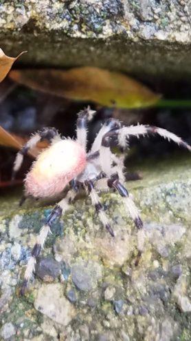 Spiders in Michigan - Species  Pictures