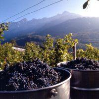 Liechtenstein wine dinner featuring HSH Princess Marie