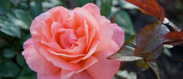 """""""Botany and the Bible – Lessons from our Prayer Garden"""""""