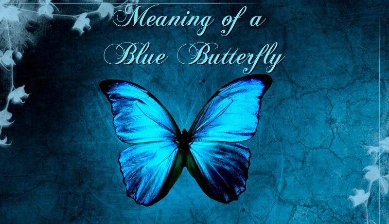 The Yellow Wallpaper Symbolism Quotes The Meaning Of A Blue Butterfly Spotting A Butterfly