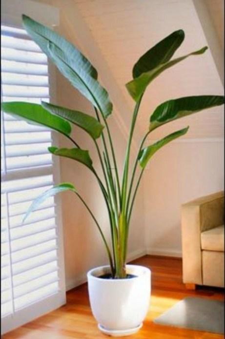 Τα φυτά βοηθάνε στην ανανέωση της θετικής ενέργειας.