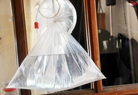 Και όμως με μια διαφανή σακούλα και λίγο νερό οι μύγες θα εξαφανιστούν από το σπίτι σας.