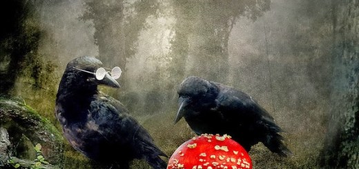 crows_and_a_mushroom