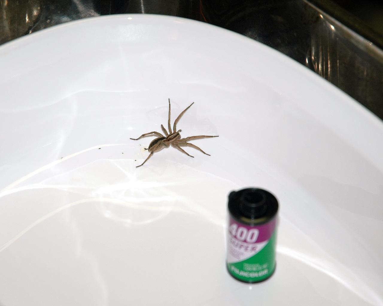 Fullsize Of Do Spiders Poop