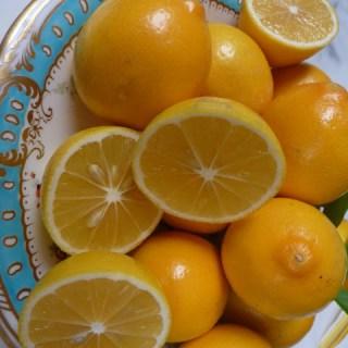 Meyer Lemons, preserved