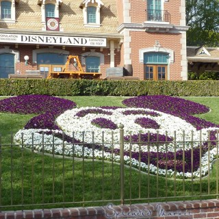 the botany of disneyland…