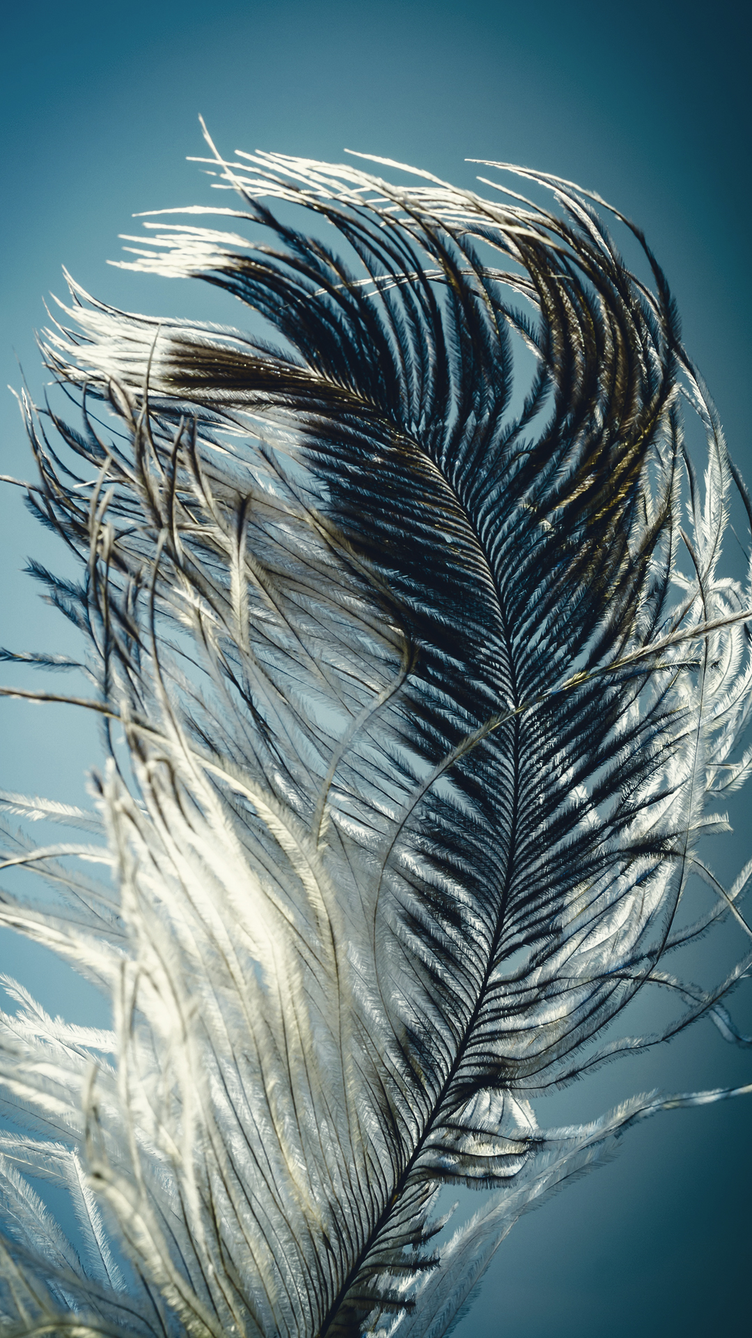 Best Wallpapers For Iphone 6 Hd Feather Light 1080 X 1920 Hd Phone Wallpaper